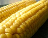 Oven-Roasted Corn on the Cob