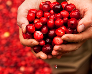 Cranberry Improves Common Male Problem