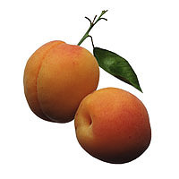 Apricots: Main Image