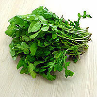 Arugula: Main Image