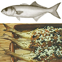 Bluefish: Main Image