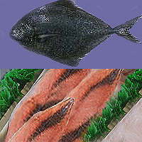 Butterfish: Main Image