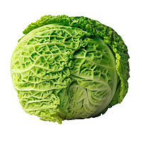 Cabbage: Main Image