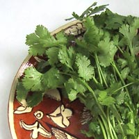 Coriander: Main Image