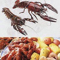 Crayfish: Main Image