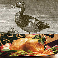 Duck: Main Image