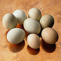 Eggs: Main Image