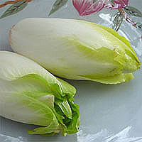 master.k.m.us.Endive Healthy Eating