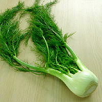 Fennel: Main Image