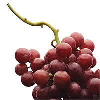 Grapes: Main Image