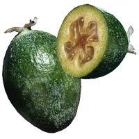 Guava: Main Image