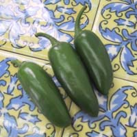 Jalapeno Pepper: Main Image