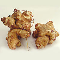 Jerusalem Artichoke: Main Image