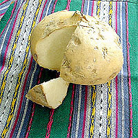Jicama: Main Image