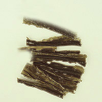 Kelp: Main Image