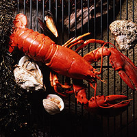 Lobster: Main Image