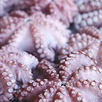 Octopus: Main Image
