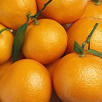 Oranges: Main Image