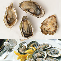 Oysters: Main Image