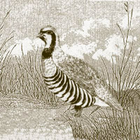 Partridge: Main Image