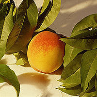 Peaches: Main Image