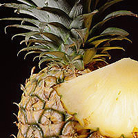 Pineapple: Main Image