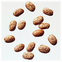 Pinto Beans: Main Image
