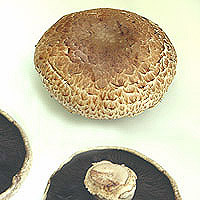 Portobello Mushrooms: Main Image