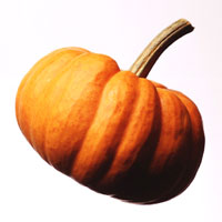 Pumpkin: Main Image