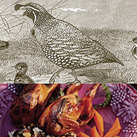 Quail: Main Image