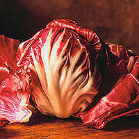 Radicchio: Main Image