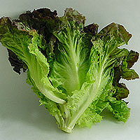Red Leaf Lettuce: Main Image