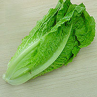 master.k.m.us.RomaineLettuce Taste of the Season
