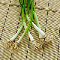Scallions: Main Image