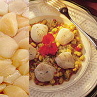Scallops: Main Image