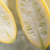 Summer Squash: Main Image