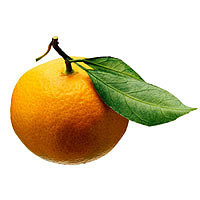 Tangerines: Main Image