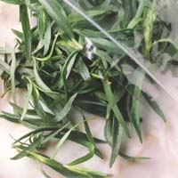 Tarragon: Main Image