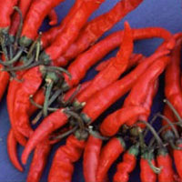 master.k.m.us.Cayenne Health Conditions