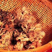 master.k.m.us.Maitake Health Conditions