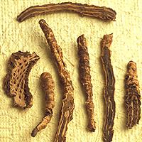 Picrorhiza: Main Image