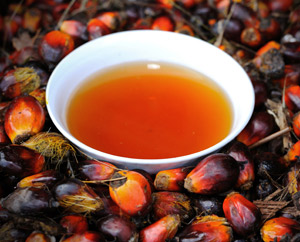 Reading Up on Red Palm Oil : Main Image