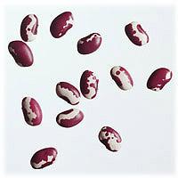 Anasazi Beans: Main Image