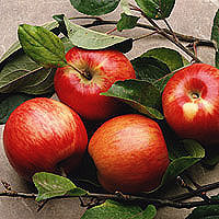 Apples: Main Image