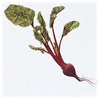 Beets: Main Image