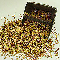 Buckwheat: Main Image