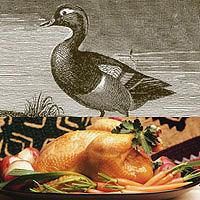 Duck: Main Image