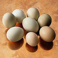 Eggs: Main Image
