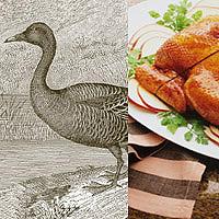 Goose: Main Image