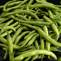 Green Beans: Main Image